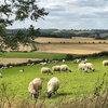 Livestock into arable