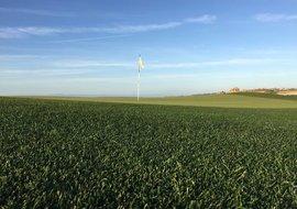 rpr golf 4