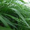 """Łąka po letniej suszy - mieszanka traw B&G 7 Milkway Water NutriFibre"""""""