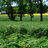Dlaczego rolnicy sieją trawy jesienią?