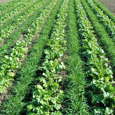 Agronomy Crops
