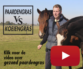 Video Paardengras versus koeiengras