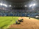 The seed of champions from Barenbrug at FIFA World Cup: Dutch grass in Russia