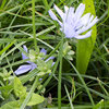 Kruidenmengsels: grassen bepalen succes