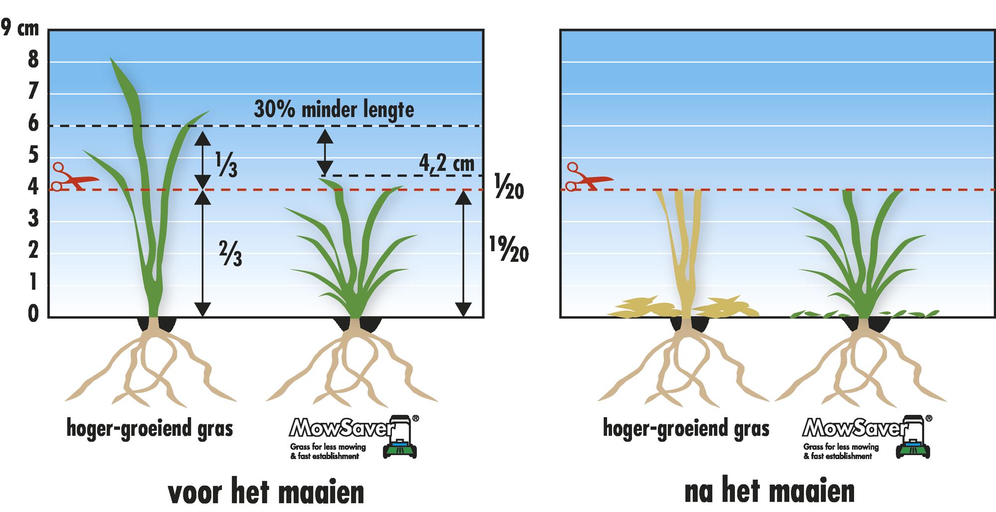 Verschil in uitstoeling bij hoger-groeiend & laag-blijvend gras