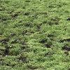 Herstel grasland na muizen- of droogteschade