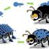 Gli insetti del tappeto erboso