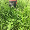 Legume power – re-learning the lost art of cultivating clover