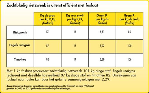 Zachtbladig rietzwenk is efficiënt met fosfaat