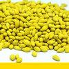 Tratamento com nematicida microbiológico das sementes de brachiaria da Barenbrug possibilita mais benefícios ao produtor
