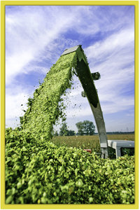 maisoogst-kostbare energie