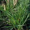 De opties voor snijmaistelers voor inzaai van gras