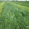 Zwiększ wydajność łąk.