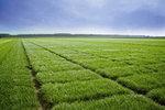 GreenSpirit-græssorter testet og gennemprøvet i Danmark