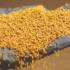 Posso comprar sementes forrageiras de safras passadas?