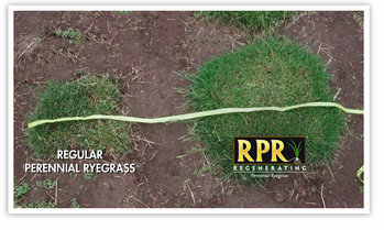 Denser sward with RPR