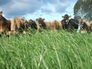 Pasture research for N mitigation