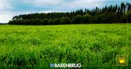 Distribuidores de sementes forrageiras da América Latina contam o sucesso de suas vendas