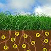 NutriFibre breng bodemfosfaat boven de grond