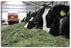 Melkproductie afhankelijk van vezels en voederwaarde