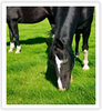 A horse pasture's quality