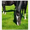 Qualität einer Pferdeweide