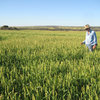 Forage crops pave the way to higher sheep production