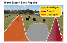 Grow Maximus Ryegrass with your bermudagrass to help supplement foraging. Green Spirit and Barkant turnips can also help extend the forage season