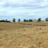 Dry pastures need TLC to recover when rain comes