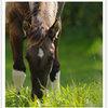 Seeding a horse pasture