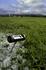 Grasland doorzaaien vroeg in het voorjaar