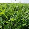 Krok po kroku- agroFakt pracuje dla Was