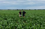 Heritage shares the risk with summer crop growers