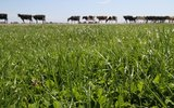 Budgeting for pasture profitability & resilience