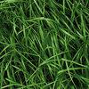 Geen hoger risico op nitraatuitspoeling bij scheuren