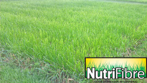 Trial plots greenstar Struktur with NutriFibre