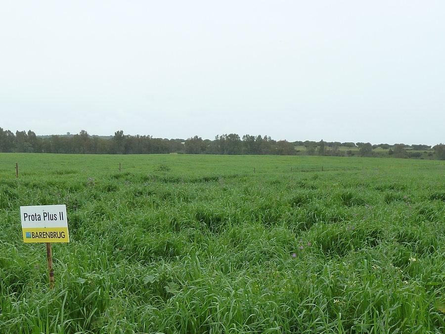 ProtaPlus field