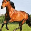Die besten Tipps zur Regeneration Ihrer Pferdeweide
